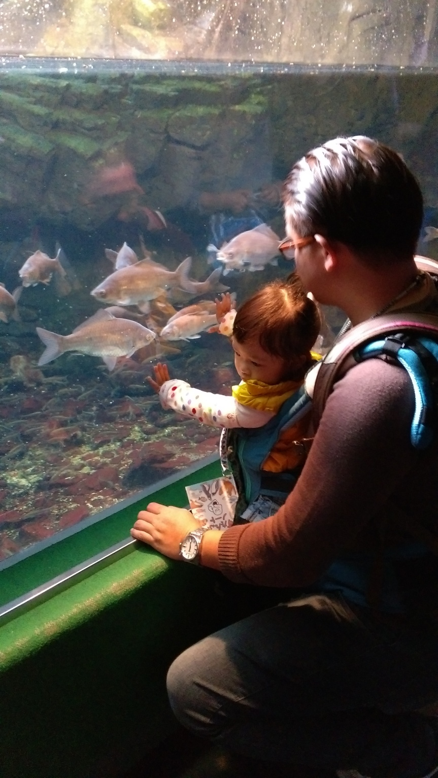 ตื่นตาตื่นใจกับโลกใต้น้ำที่ Kaiyukan Aquarium